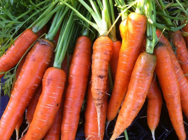 mokum-carrots-039